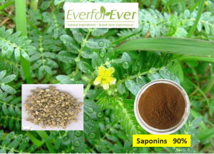https://www.everforeverbio.com/tribulus-terrestris-extract/