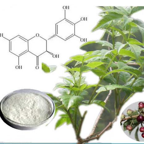 EverforEver-Dihydromyricetin