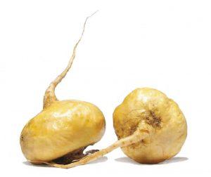 maca-root-main