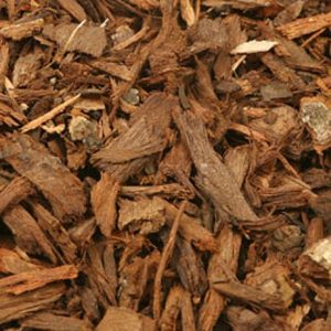 Pygeum africanum Extract