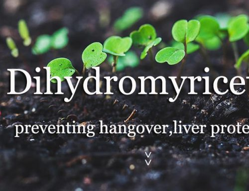 What Studies Prove Dihydromyricetin is an Effective Hangover Cure?